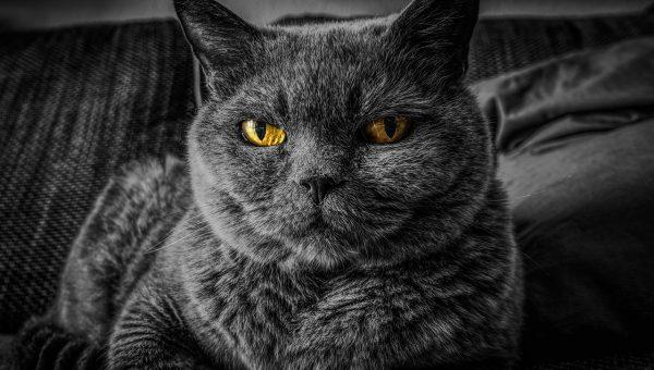Gatti: 5 motivi per scegliere di adottare un gatto
