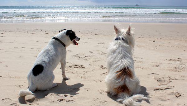Vacanze e animali domestici: che fare quando è ora di partire?