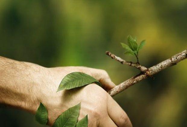 mano con ramo