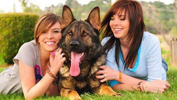 10 delle razze di cani più intelligenti