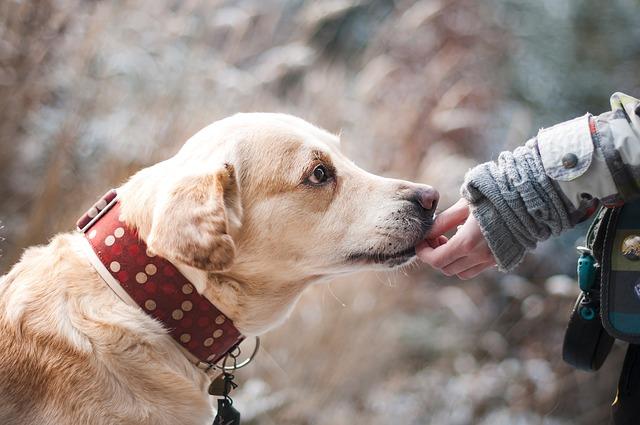 Come curare l'otite nel cane