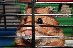 Migliori gabbie per criceti: come sceglierle