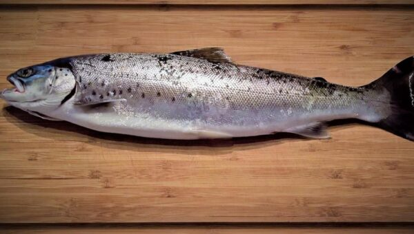 Benefici nutrizionali delle proteine del pesce
