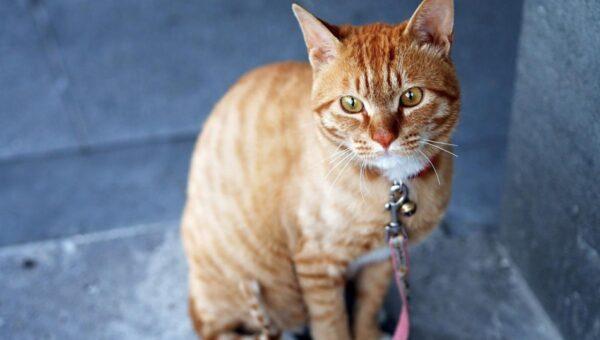 Non sempre trasportare i gatti è un'operazione semplice ma uno zaino può venirci in aiuto