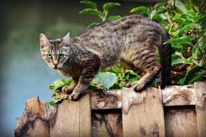 Crocchette per gatti: ingredienti e funzionalità degli alimenti
